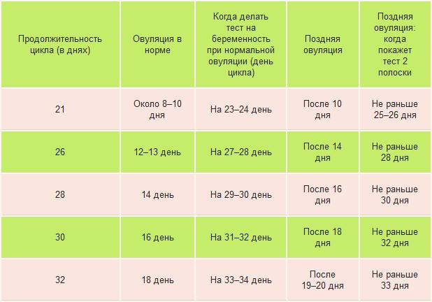 Если цикл 25-26 дней когда будет овуляция - Интересные статьи и факты! Axonopal.ru