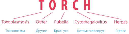 TORCH-инфекции при бременности