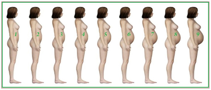 Как выглядит живот на первом месяце беременности
